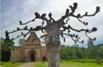 A pollarded tree